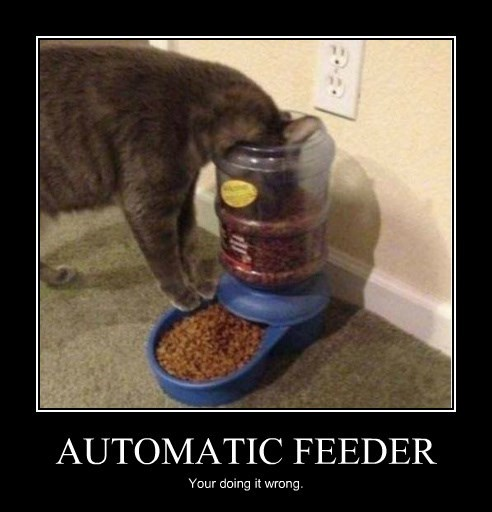 feeder cat automatic wrong caption - 8470250752
