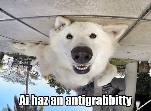 ohai dogs anti gravity smile