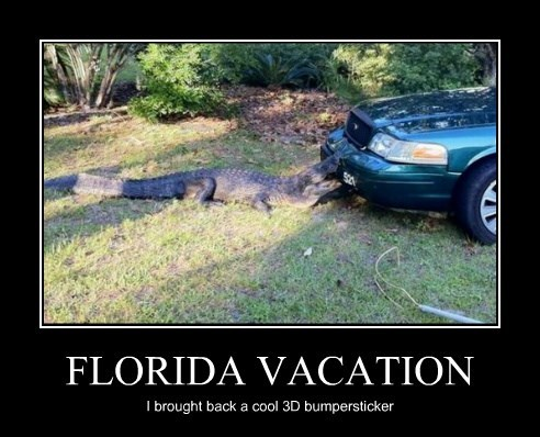 3d,alligator,car,bumper sticker,attack,florida,bite