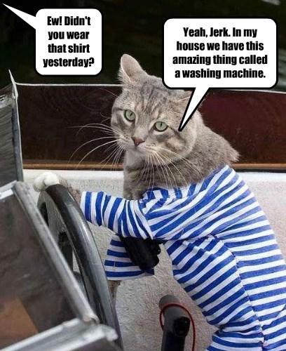 cat washing machine shirt caption