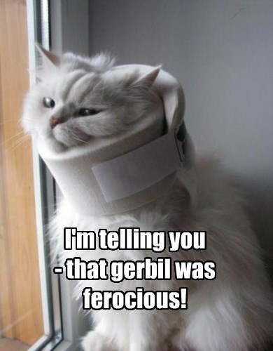 I'm telling you - that gerbil was ferocious!