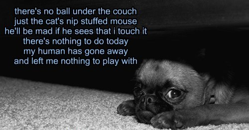 there's no ball under the couch just the cat's nip stuffed mouse he'll be mad if he sees that i touch it there's nothing to do today my human has gone away and left me nothing to play with
