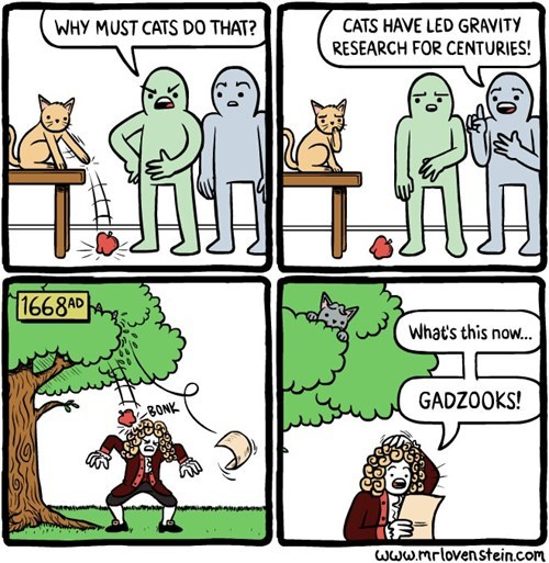 funny-web-comics-why-do-cats-do-that