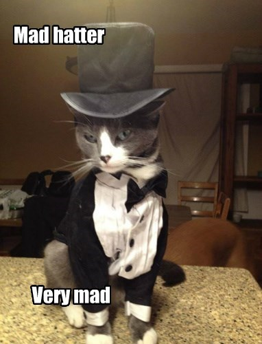 alice in wonderland,mad hatter,tuxedo,angry,Cats,hat