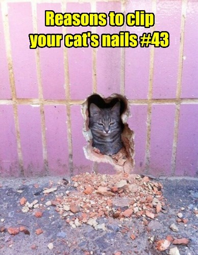 bricks hole sorry digging Cats wall mouse - 8471014656