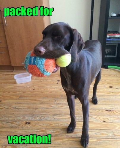 balls dogs lets go packec vacation - 8471056128