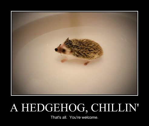 A HEDGEHOG, CHILLIN'