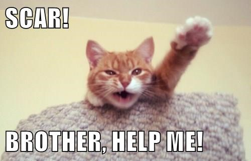 animals tabby mufasa scar help lion king betrayed Cats - 8471592192