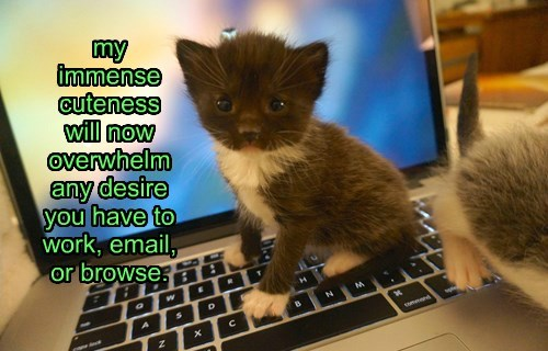 kitten cute computer overwhelmed Cats squee - 8471597312