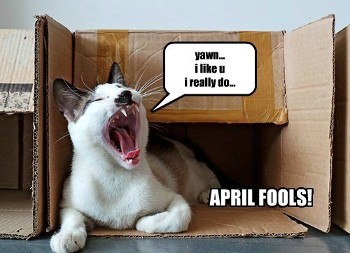 Every Day is April Fool's for Your Cat