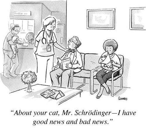 funny-web-comics-at-the-vet-with-mr-schrdinger