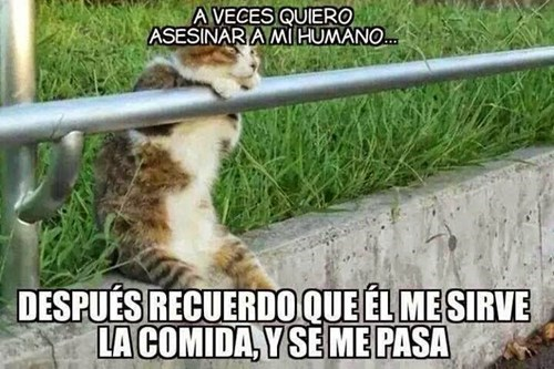 dueno de gato