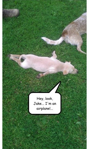 dogs captions funny - 8471898624