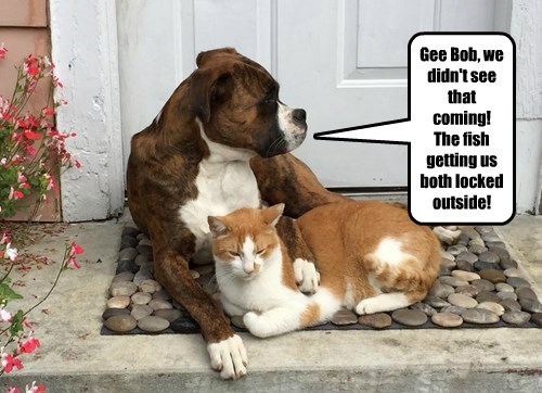 Cats dogs fish surprised rivals - 8471899648