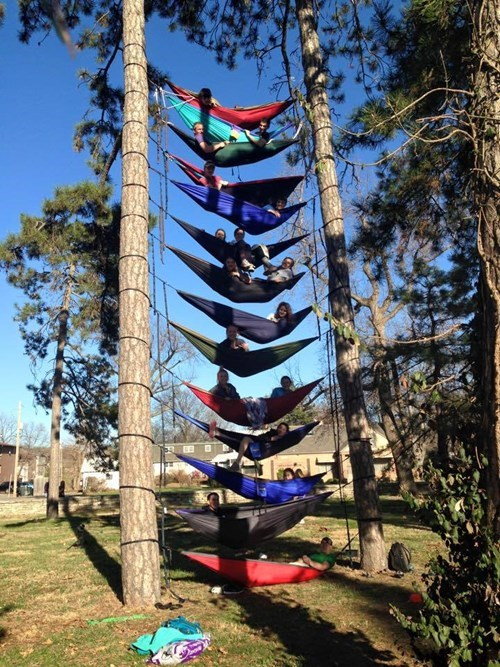 epic-win-pic-design-hammock-tree