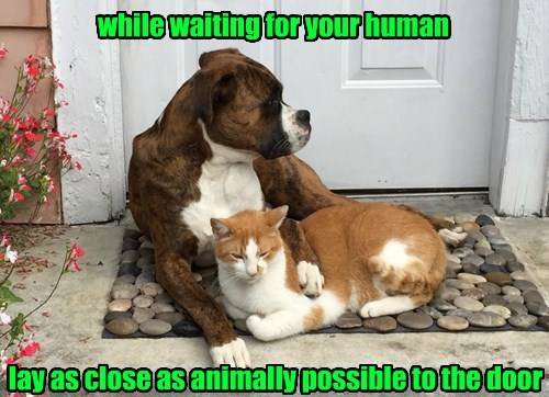 dogs captions cute Cats - 8471994112