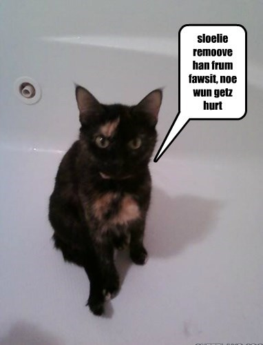 Kittynovich's Ginger not into jets of water.
