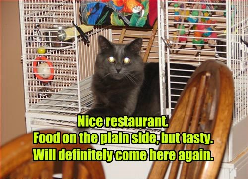 review restaurant food noms Cats