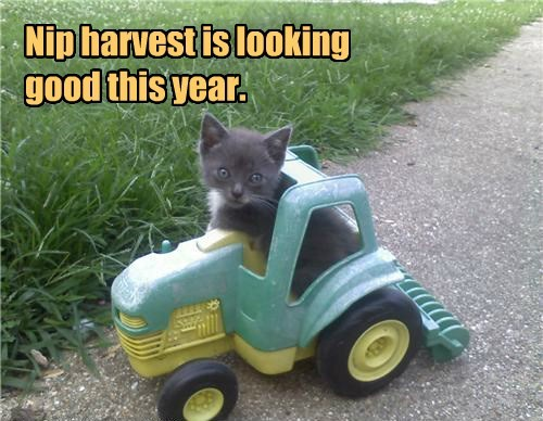 tractor,farmer,nip,harvest,Cats