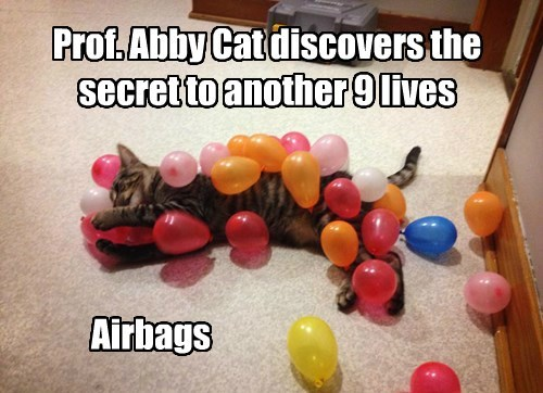 Prof. Abby Cat discovers the secret to another 9 lives Airbags