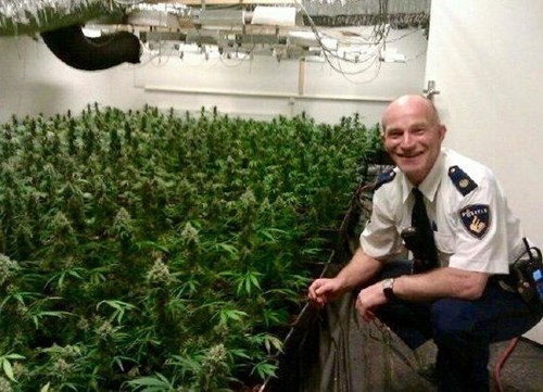 dutch cops love weed
