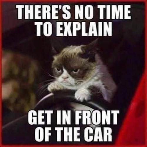 Grumpy Cat no time to explain nope Cats - 8472326912