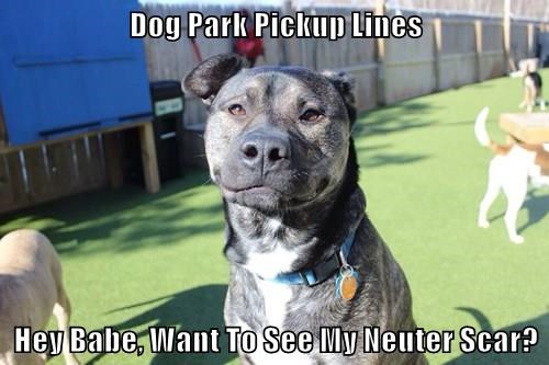 Dog Park Pickup Lines Hey Babe, Want To See My Neuter Scar?