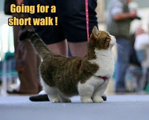 leash puns walk legs Cats short - 8472586240