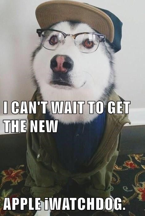 animals dogs glasses puns hipster apple - 8472595200