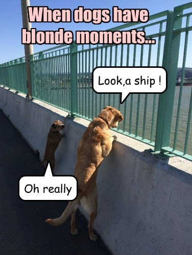 dogs captions funny - 8472721664