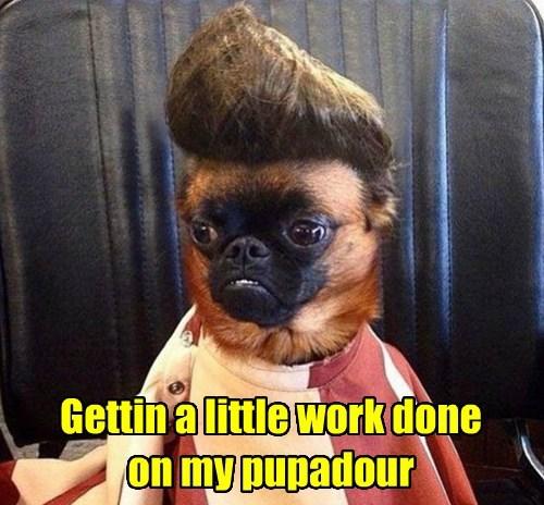 hair dogs pug puns style - 8472728064