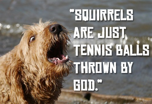 dog religion funny dog pictures