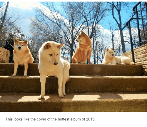 dogs Music album cover shiba inu - 8473039104