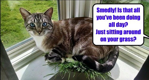 Smedly! Is that all you've been doing all day? Just sitting around on your grass?