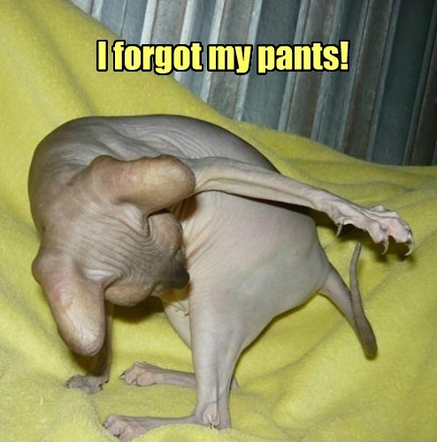 naked whoops pants Cats - 8473192192