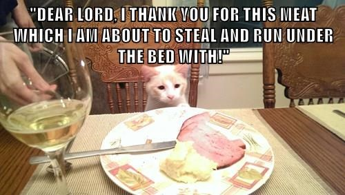 animals steal easter dinner noms Cats thief - 8473226496
