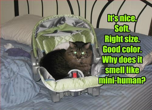 thanks bed gift why Cats - 8473256704
