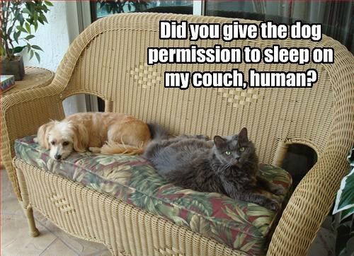how dare you dogs wtf couch Cats - 8473280512