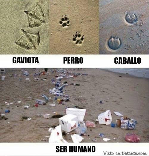 animales vs seres humanos