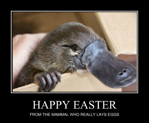 HAPPY EASTER FROM THE MAMMAL WHO REALLY LAYS EGGS