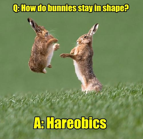 Q: How do bunnies stay in shape? A: Hareobics