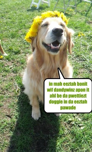 easter,dogs,flowers,golden retriever,bonnet