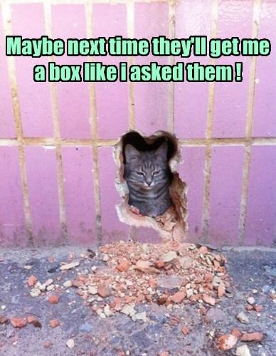 box if i fits i sits Cats wall - 8473793280