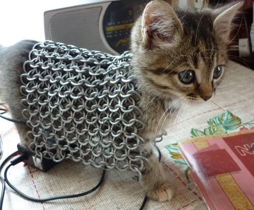kitten wearing armor funny cat pictures