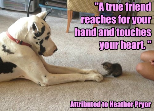 cat dogs heart touch caption quote - 8474242304