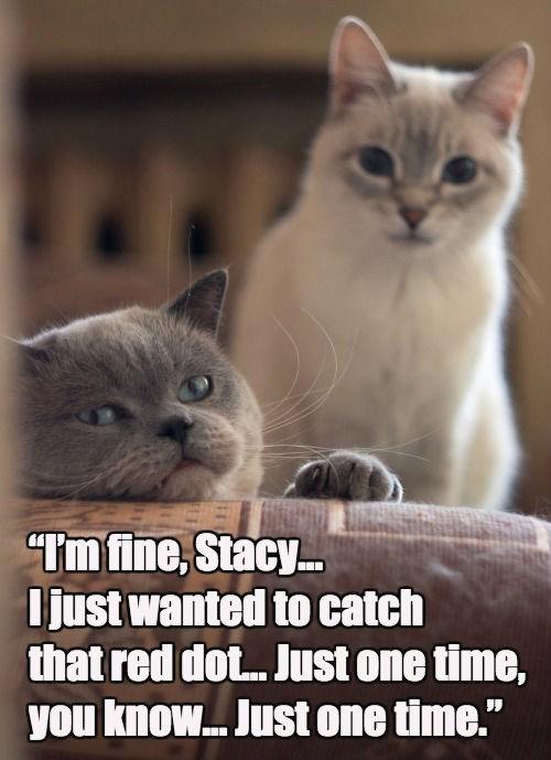 Sad depressed red dot Cats - 8474282496