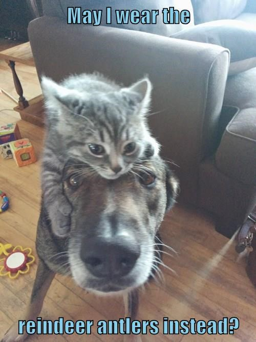 animals - 8474335488