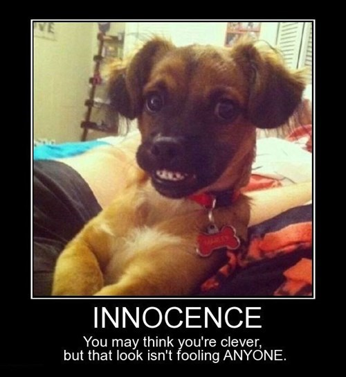 cute dogs funny innocent - 8474349568