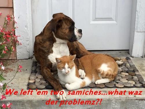 animals - 8474474752