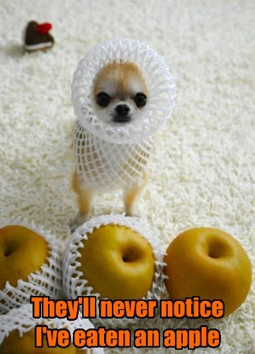 dogs captions funny - 8474585600